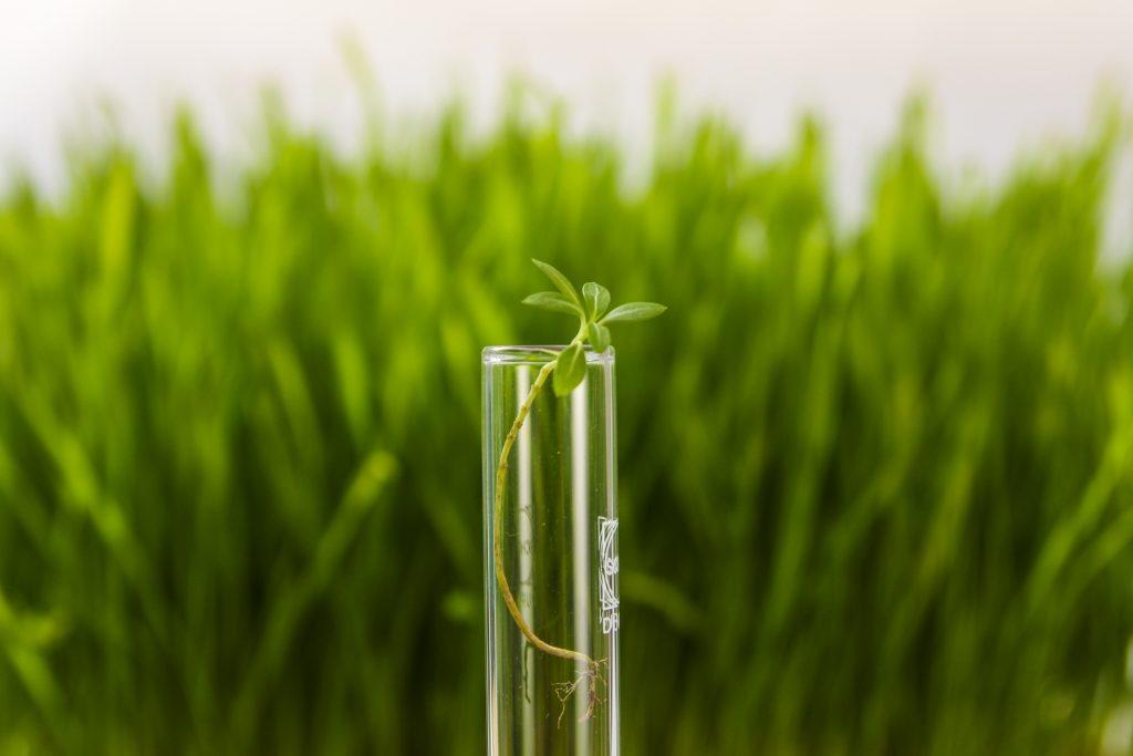農業分野におけるキチンナノファイバーの研究